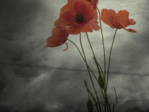 RSL Virtual War Memorial